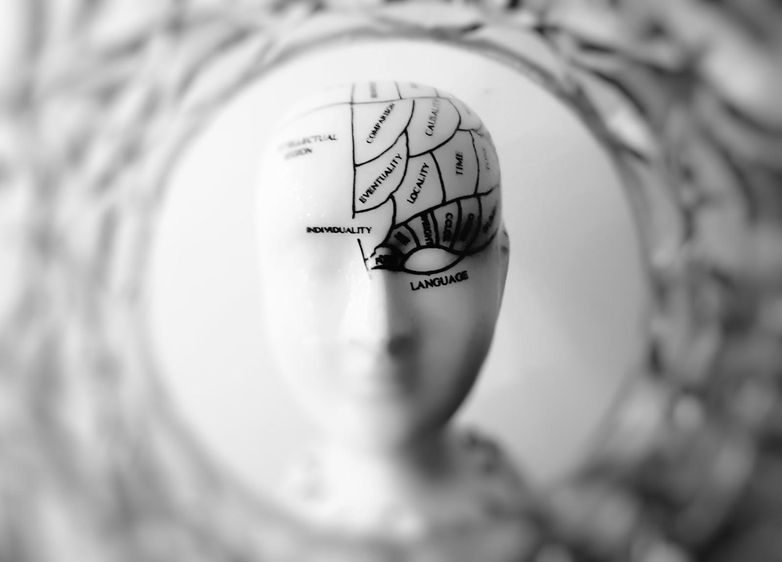 figure with brain regions drawn on