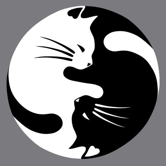 Painting of a black cat and a white cat laying in a Yin Yang symbol positon.