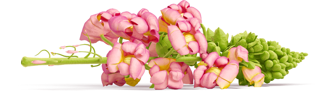 Kvetina vertikálna