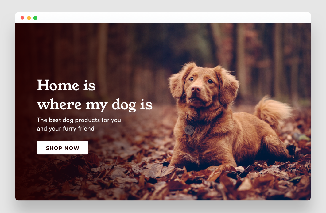 Landing page image for ecommerce store in the dog niche