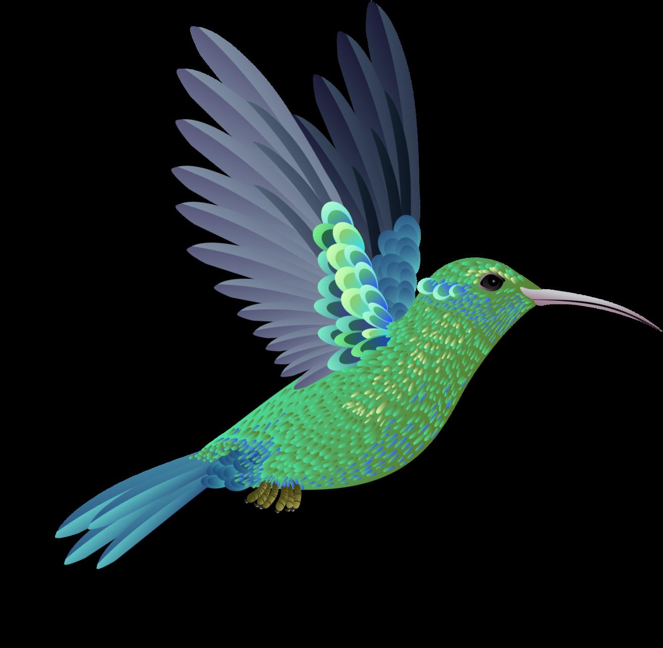 Un Colibrí Verde con Azul volando