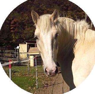 White horse 'Chester'