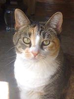 Cat 'Oti'