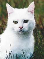 White cat outside 'Elfy'