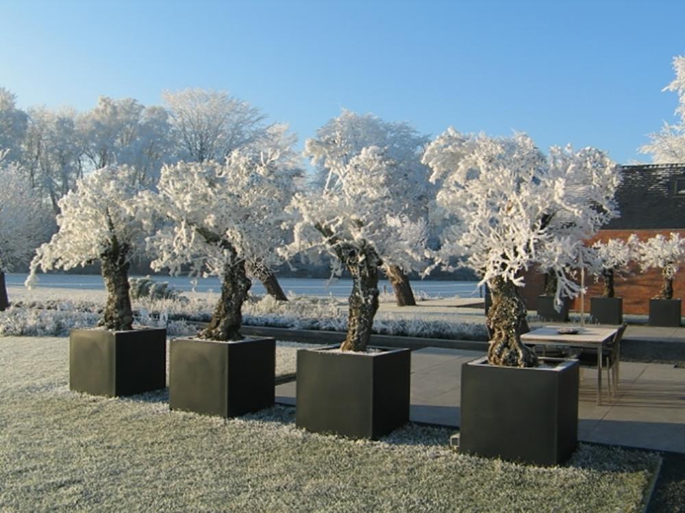 Moderne tuinen winter maarsbergen