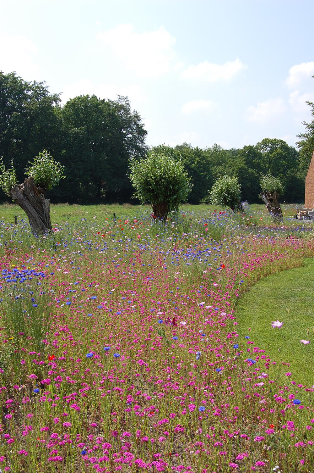 Moderne tuinen bloemmengsel Maarsbergen