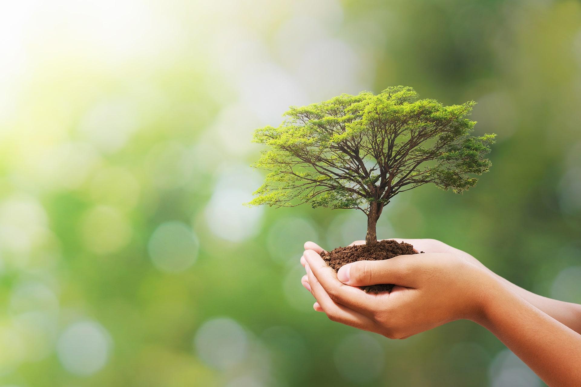 Institut Aurovida - Blog - Développement personnelet conscience de soi
