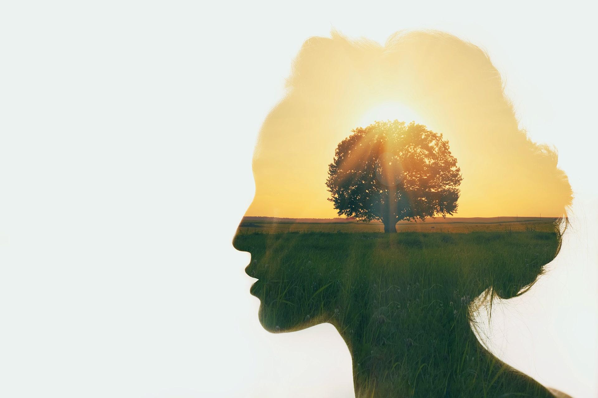 Institut Aurovida - Blog - Nos pensées créatrices ou destructrices? Avons-nous le choix?