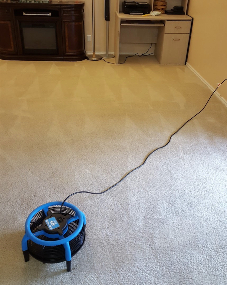 carpets recently cleaned in a forney home