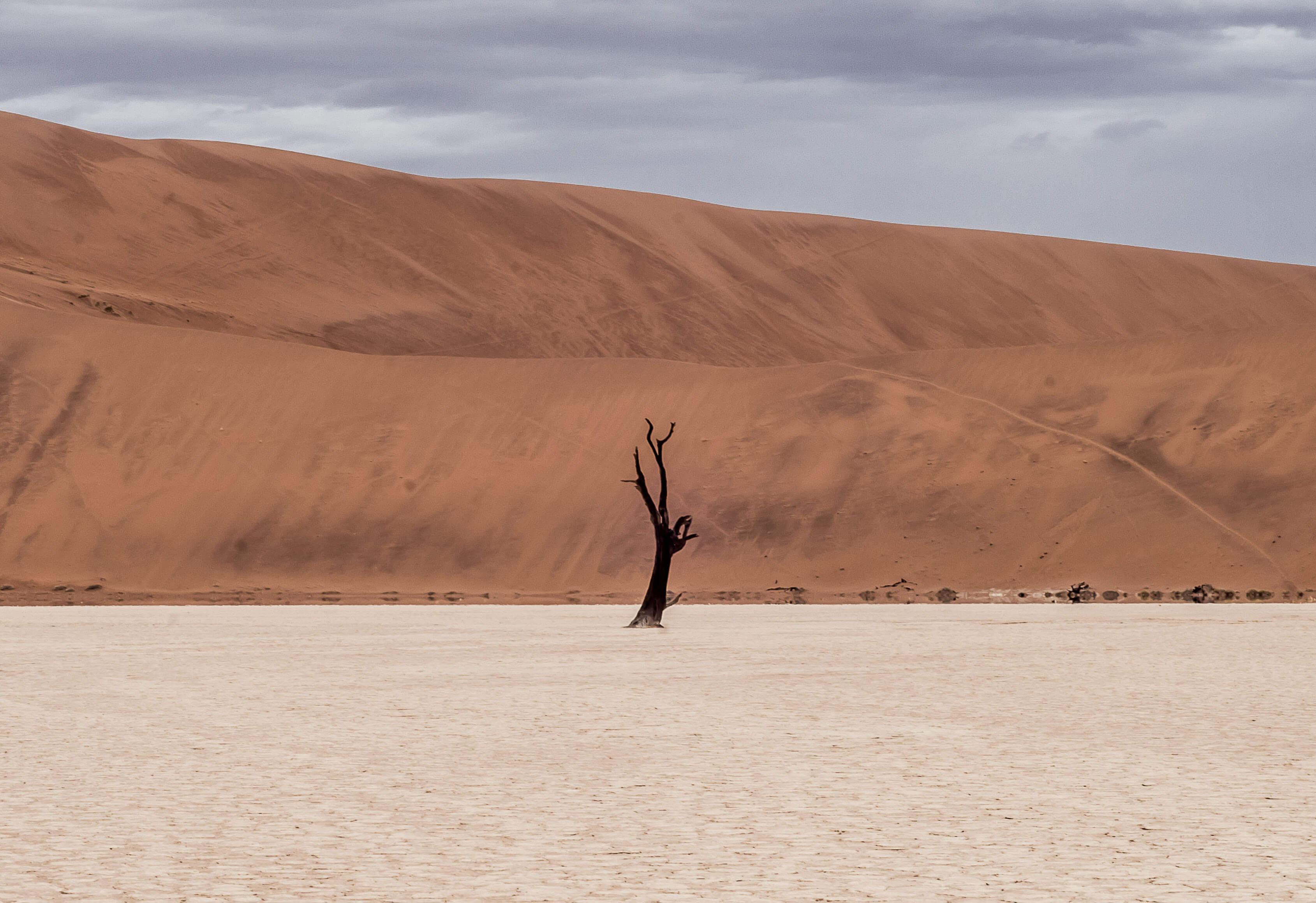 Journey Of The Universe - Desert