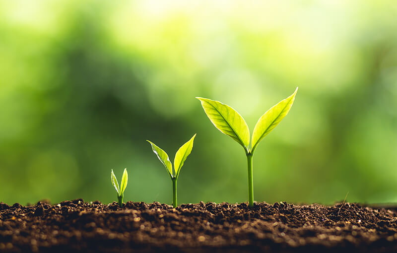 Image depicts three plants side by side, at various stages of development, coming up out of the soil against an organic green background. - Neovation Learning Solutions