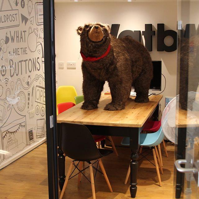 bear on a table