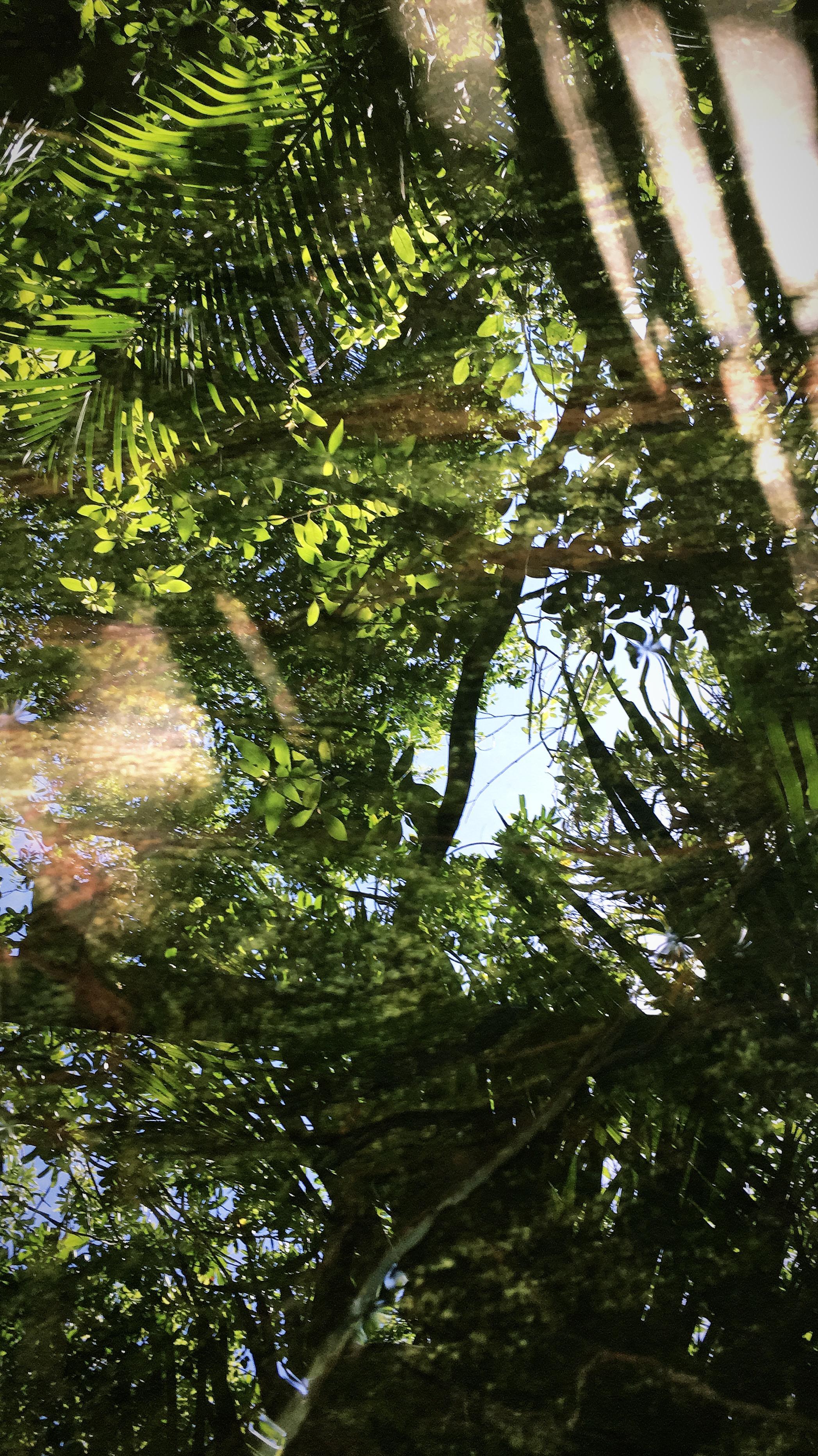 enchanting-transformation-water-treatment