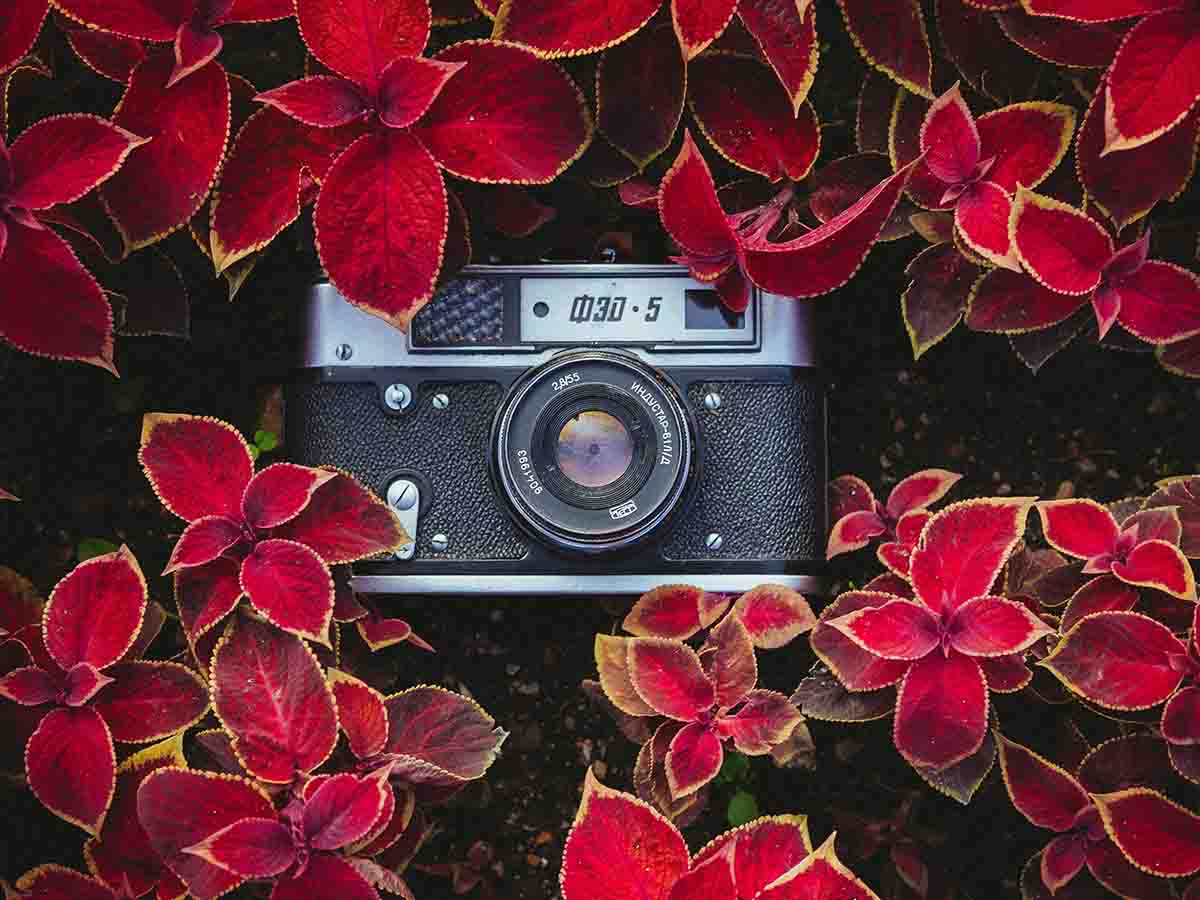Camera in a bed of flowers