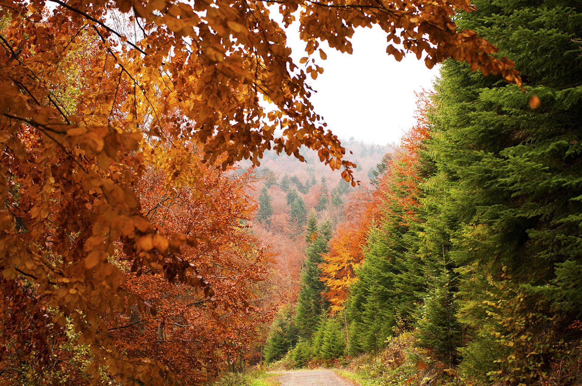 jesienne szlaki w górach