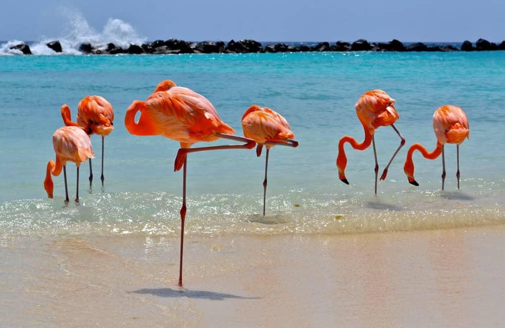 Viaggio di nozze a Giugno Isola di Aruba