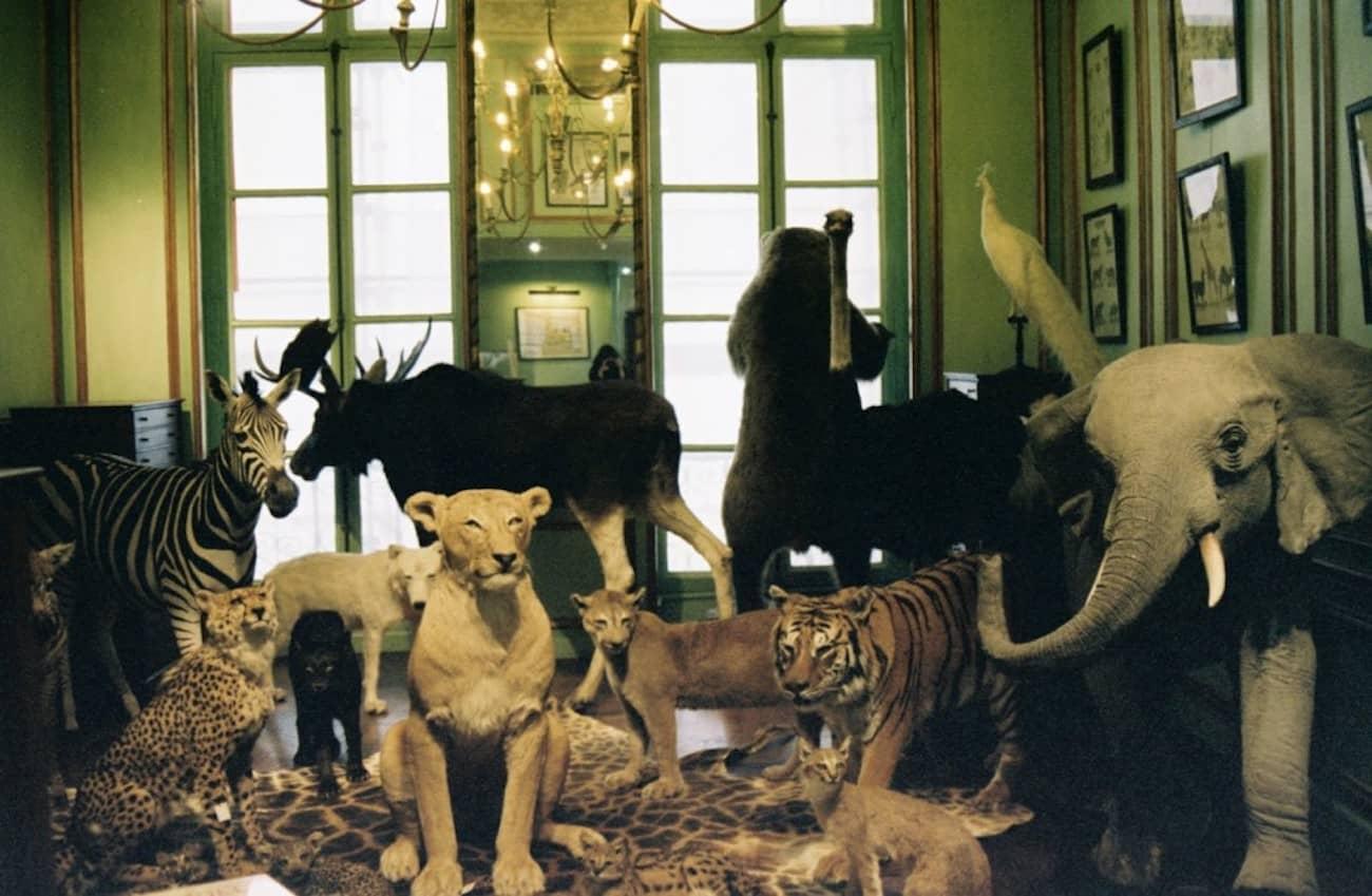 Parigi Deyrolle  - I negozi più strani del mondo