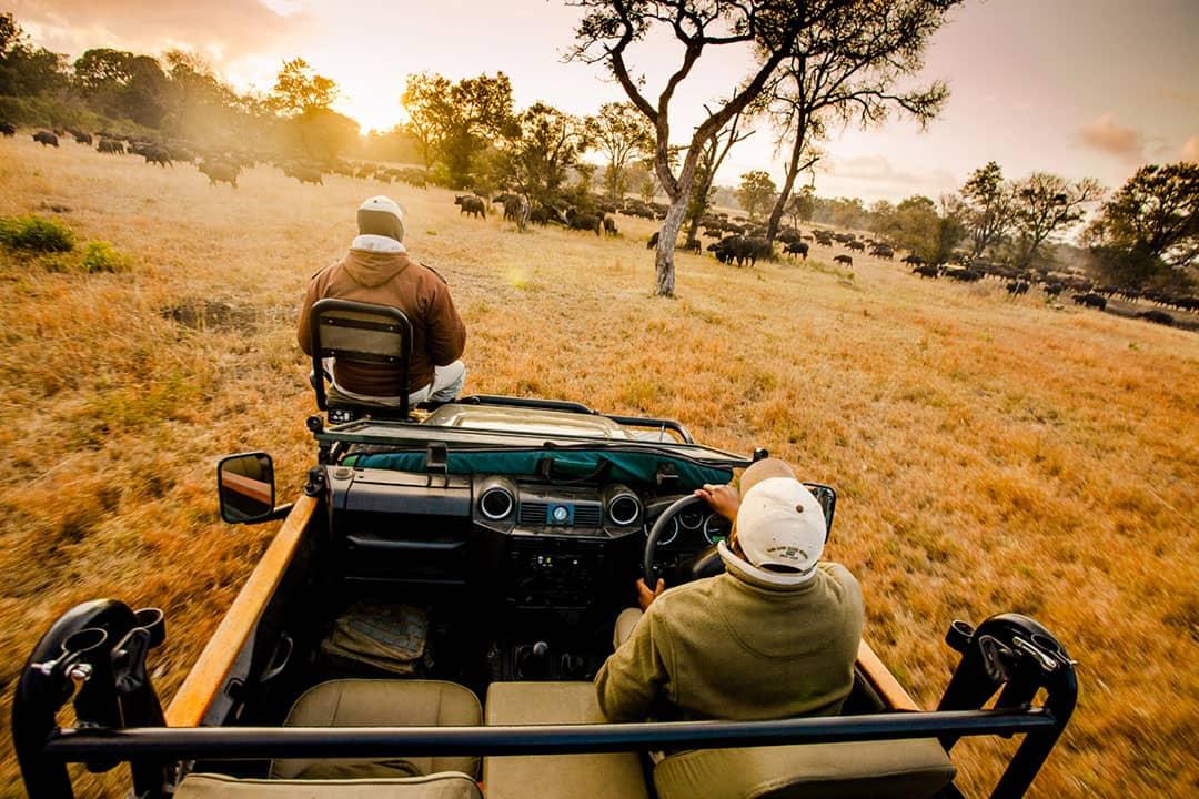 Viaggio di nozze Agosto Sudafrica jeep safari