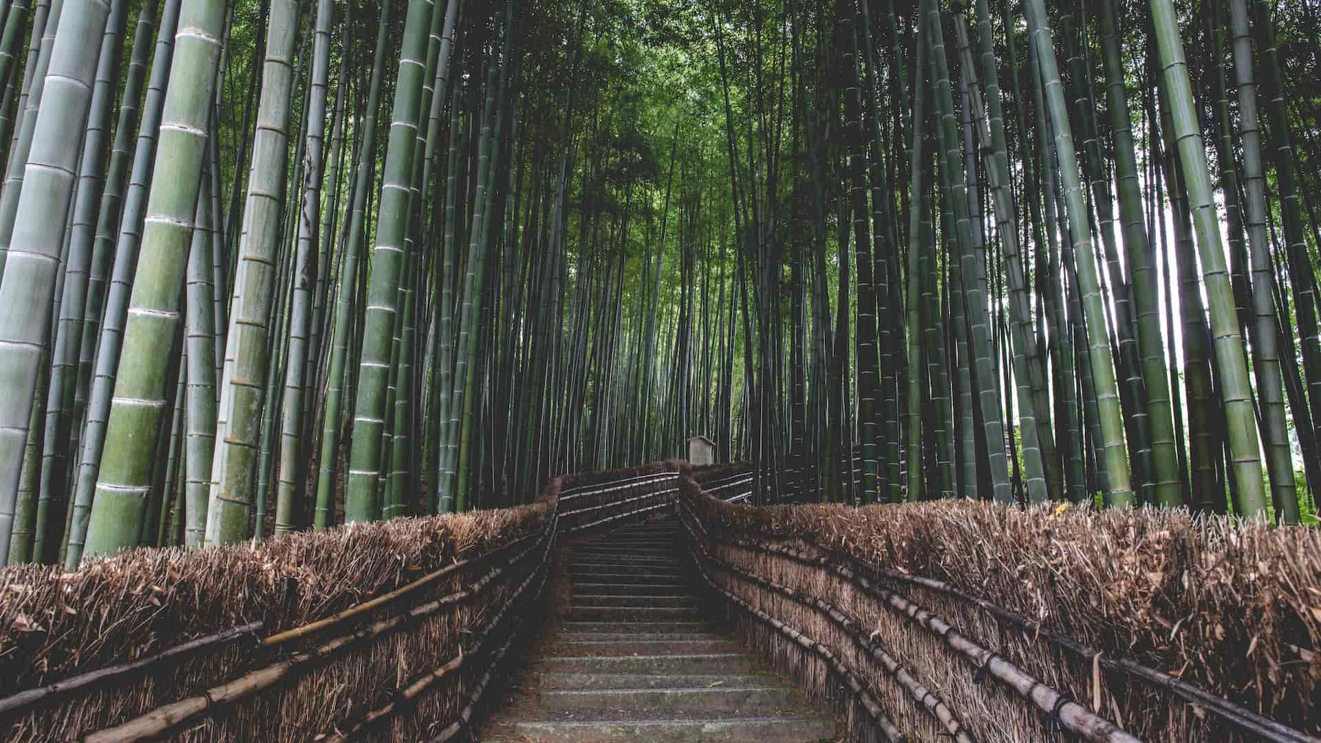 Bambo forest Tokyo viaggio di nozze Giappone
