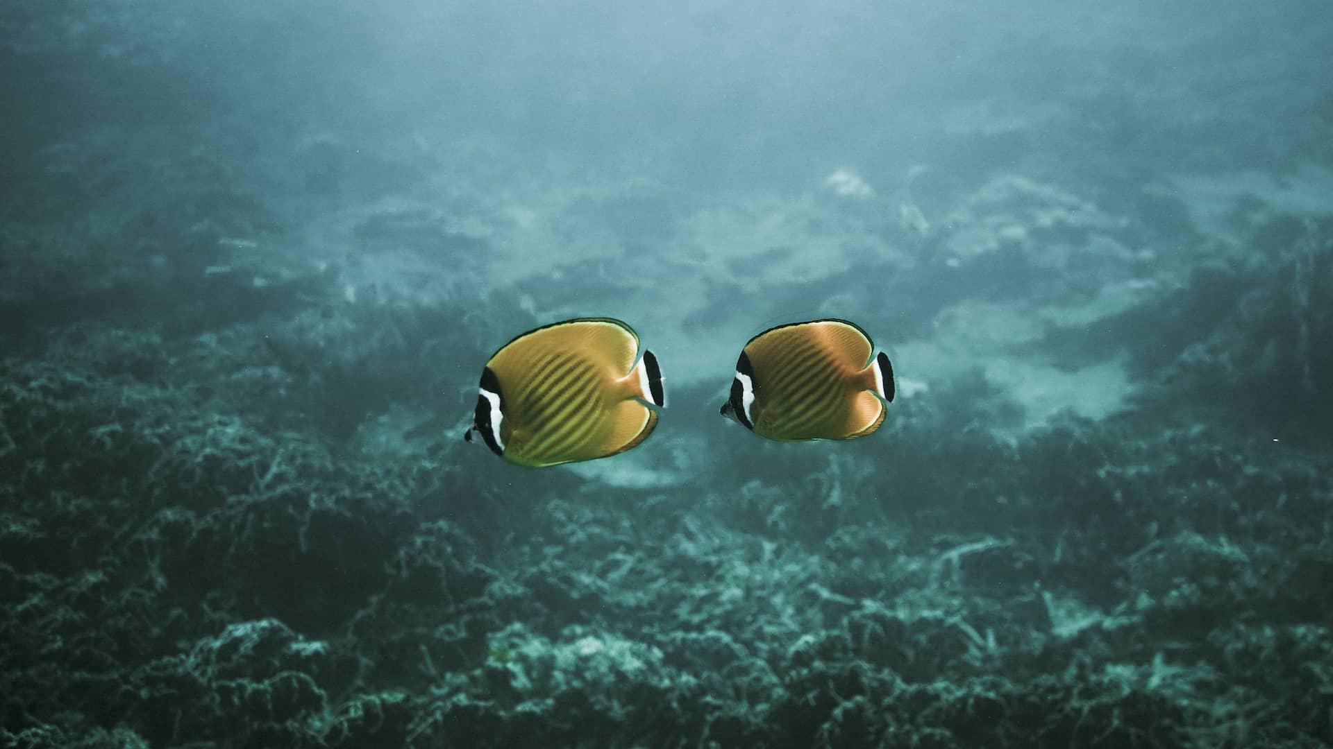 Viaggio di nozze in Thailandia diving