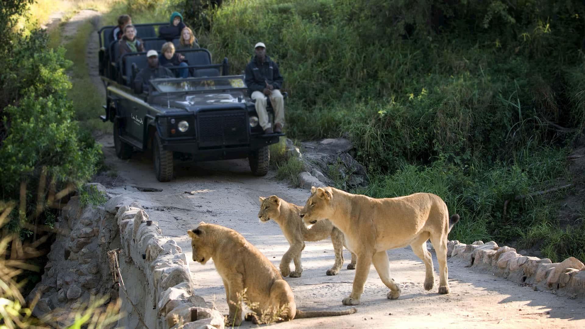 Viaggio di nozze agosto safari