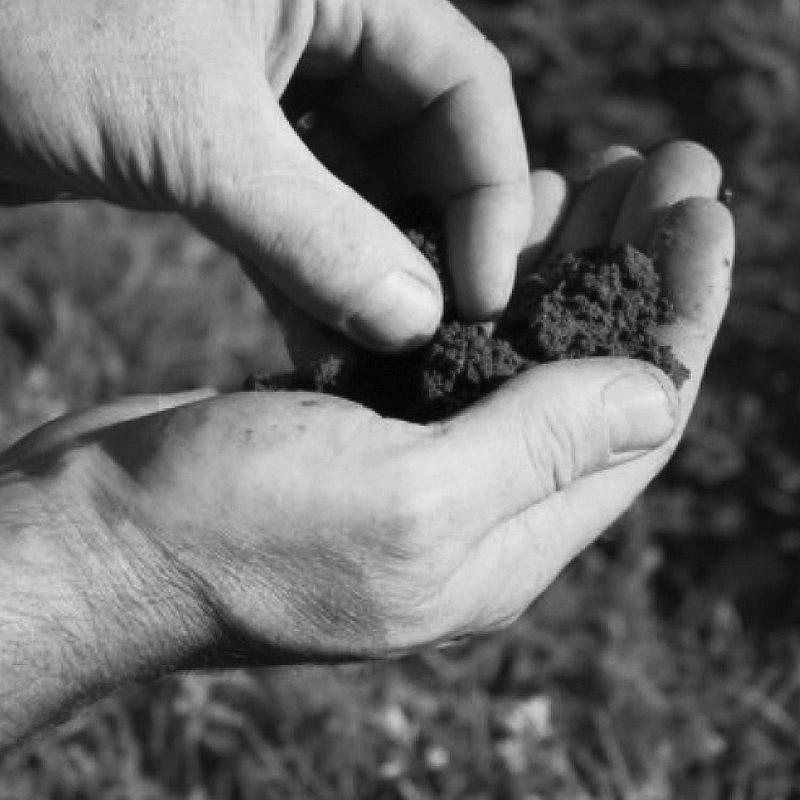 Hands checking vineyard soil