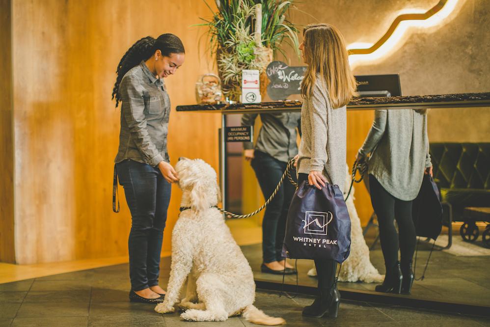 Pet Friendly Hotels Reno Nv Pet Friendly Hotel Rooms Reno