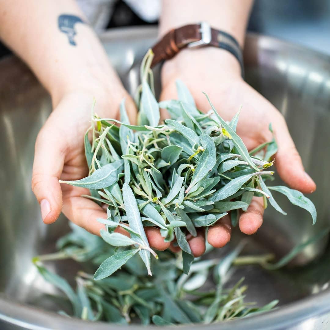 DIY gin-making with Holly Klintworth
