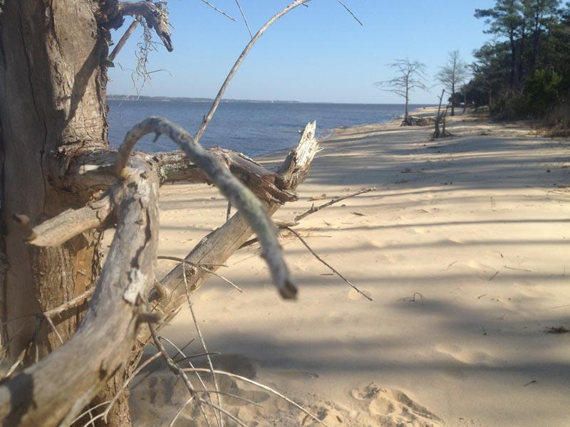 Photo of ocean, beach, and forest edge at Croatan National Forest, North Carolina
