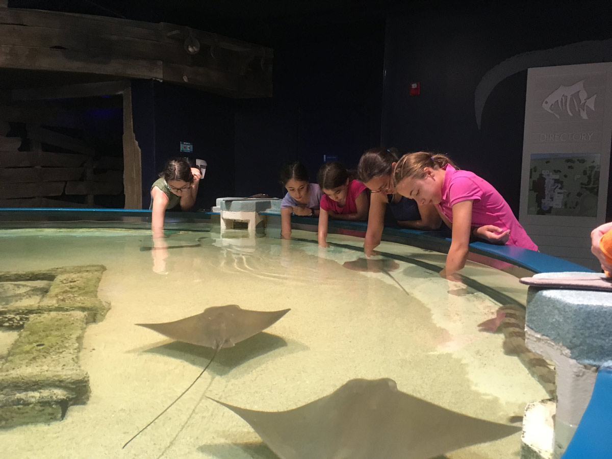 mother and four daughters reaching hands into the touch tank at the North Carolina Aquarium on Roanoke Island, North Carolina