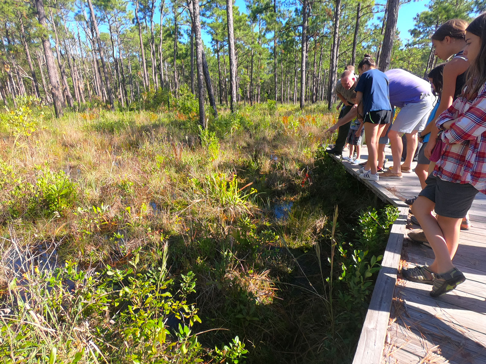 Ranger leads a group of visitors on the Flytrap Trail at Carolina Beach State Park in North Carolina