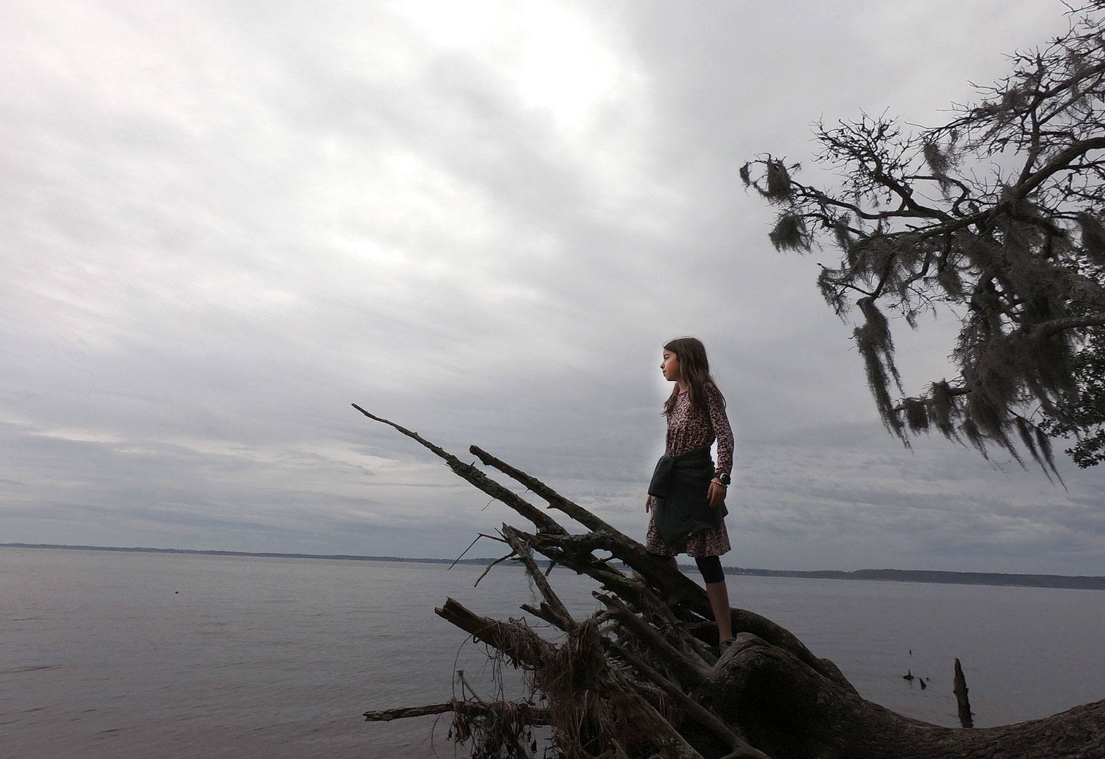 Girl standing proud on the roots of a fallen oak tree overlooking the Pamlico Sound at Goose Creek State Park in North Carolina