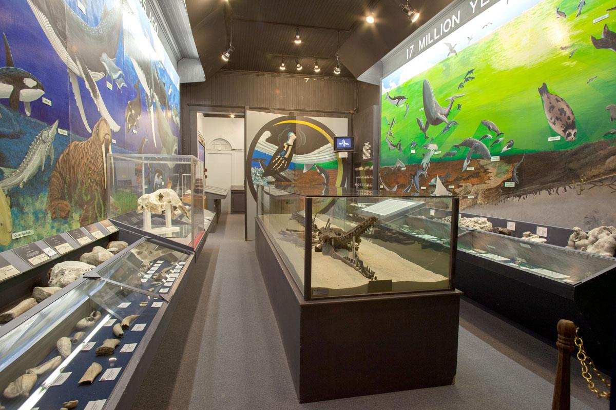 Interior exhibits of Aurora Fossil Museum