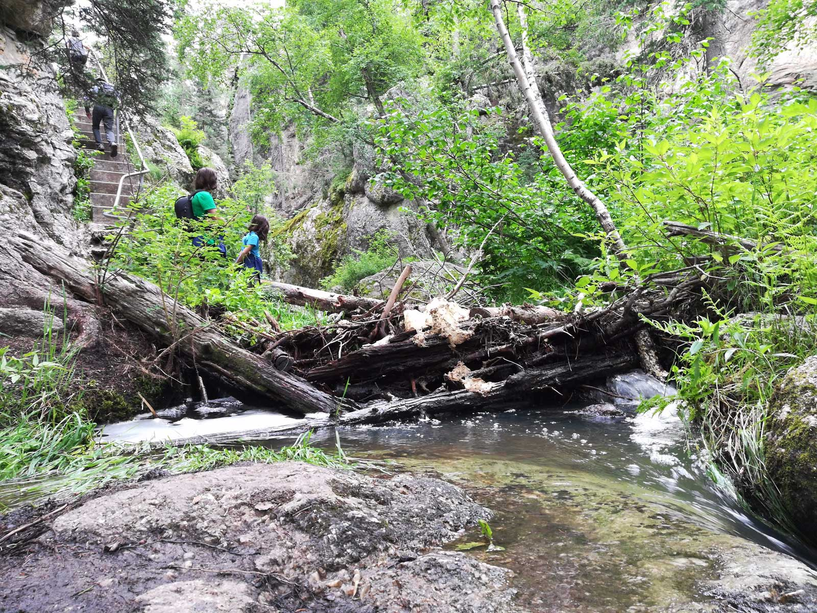 Photo of Sunday Gulch Trail with four people hiking steep stairs near a stream crossing in Custer State Park, South Dakota
