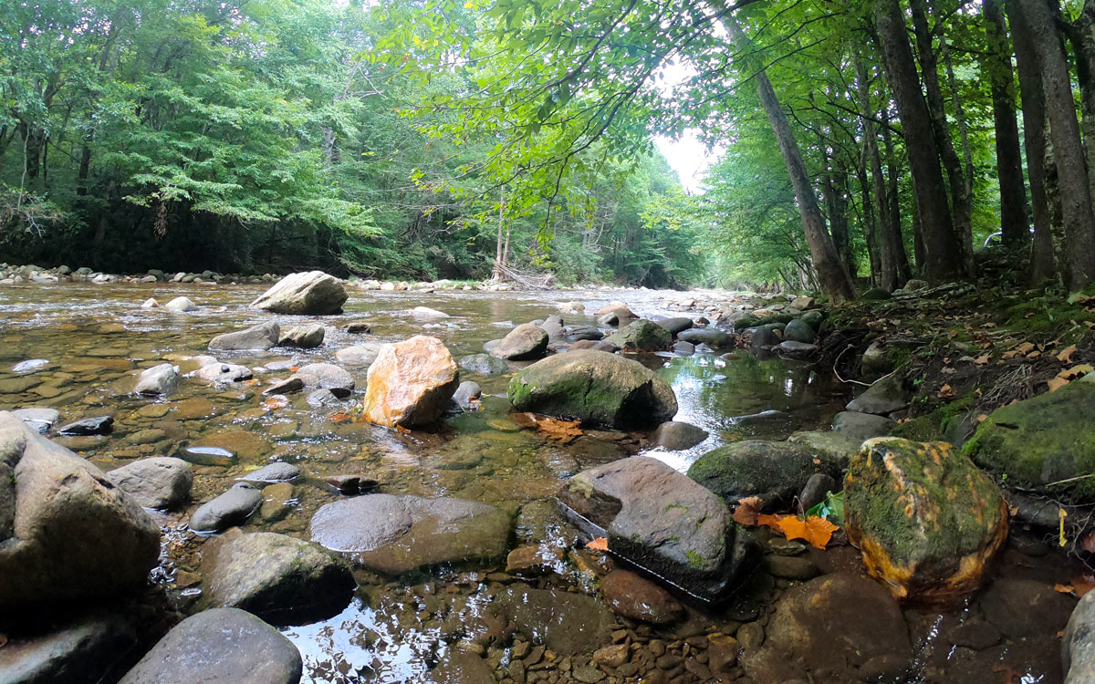 The Toe River near Black Mountain Campground