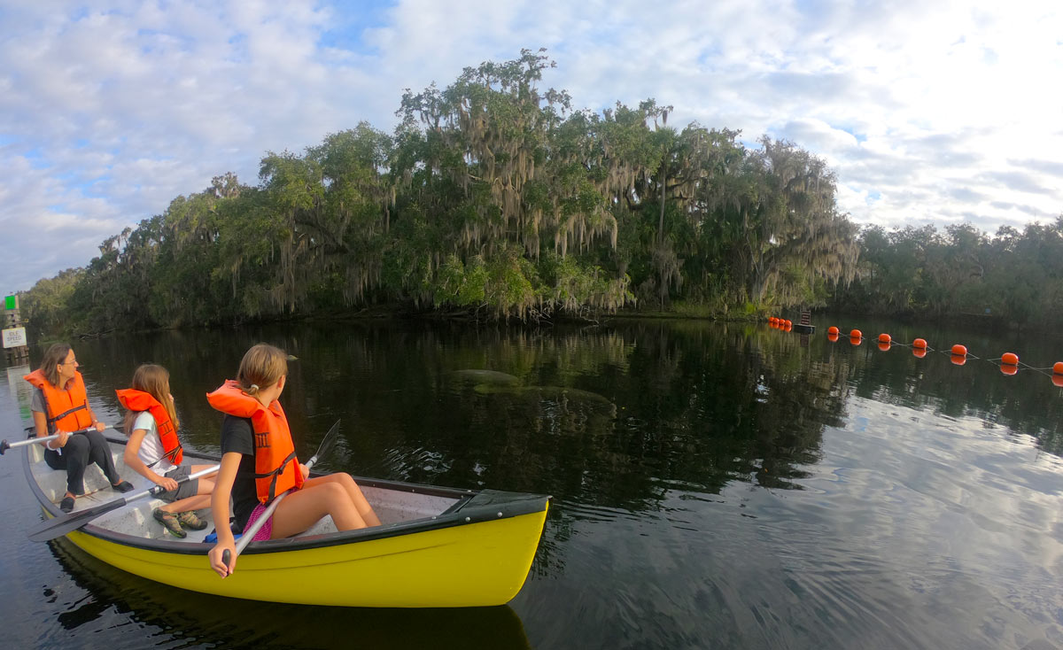 Three people in a canoe looking at two manatees in the water at Blue Spring State Park, Florida