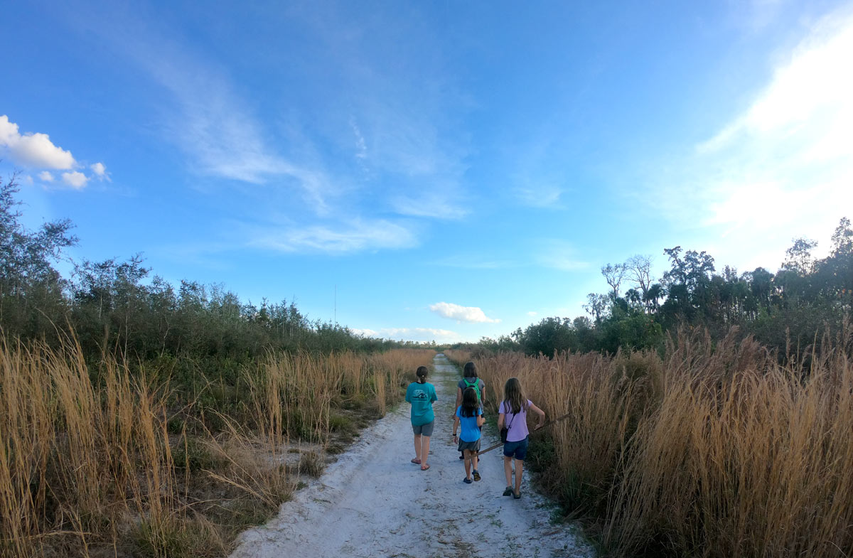 Four people hiking a sandy road of the Pine Island Trail under the open sky at  Blue Spring State Park, Florida