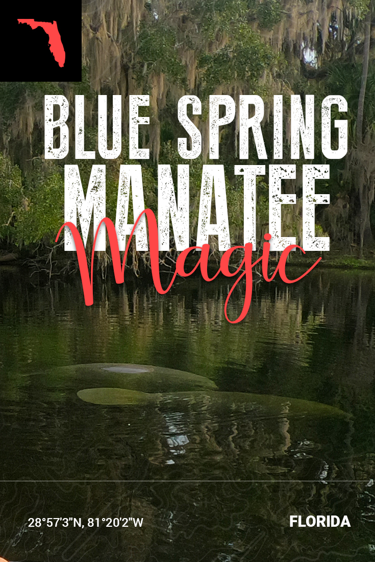Pinterest Pin - Blue Spring State Park