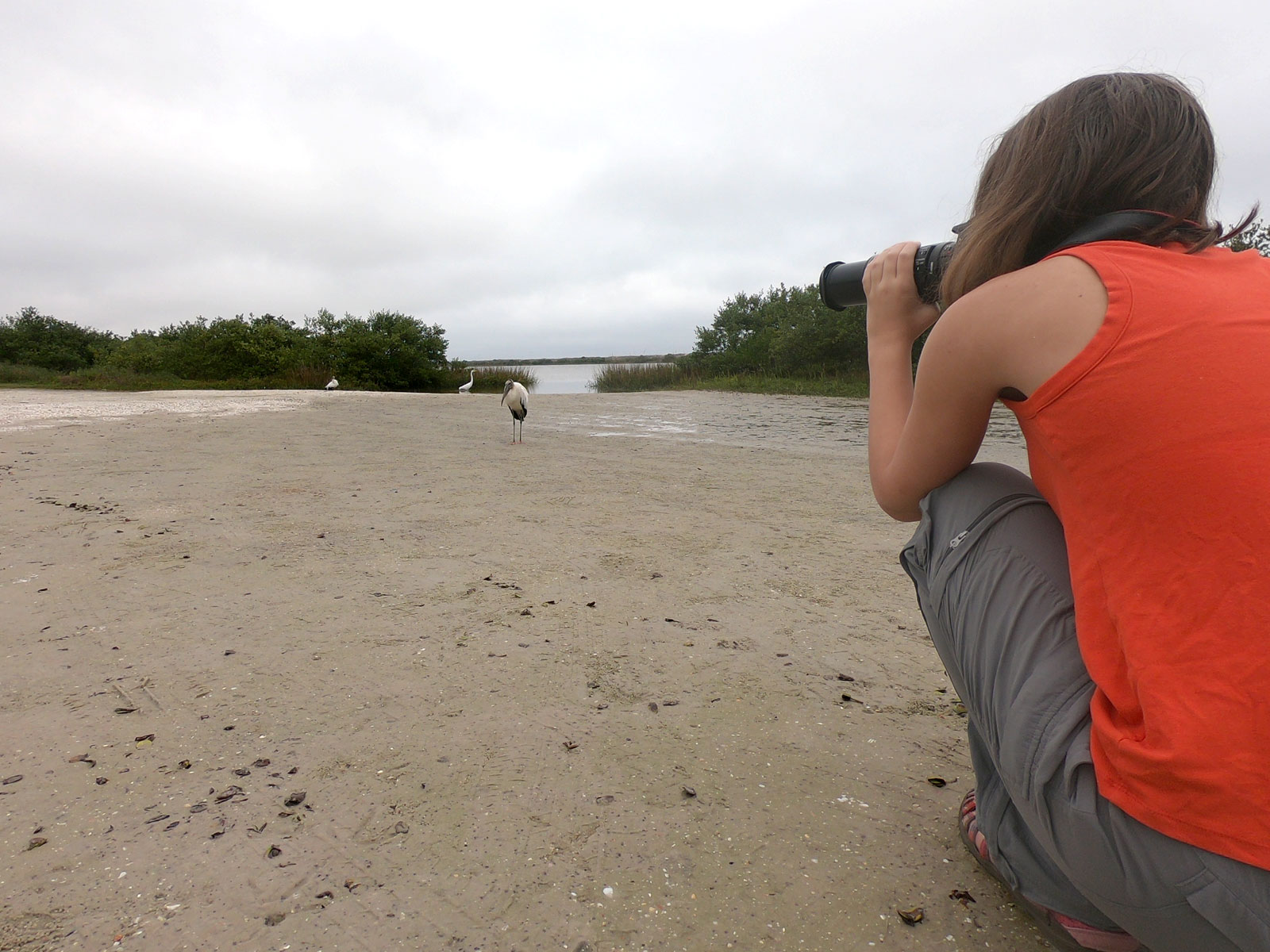 Girl using a camera to photograph a woodstork on beach of Anastasia State Park, Florida