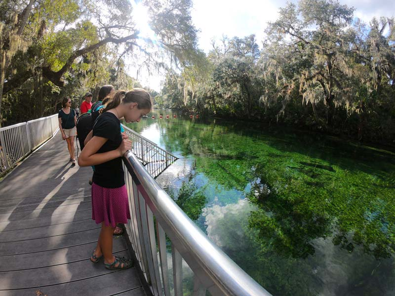 Girls looking in the green waters at Blue Spring State Park, Florida