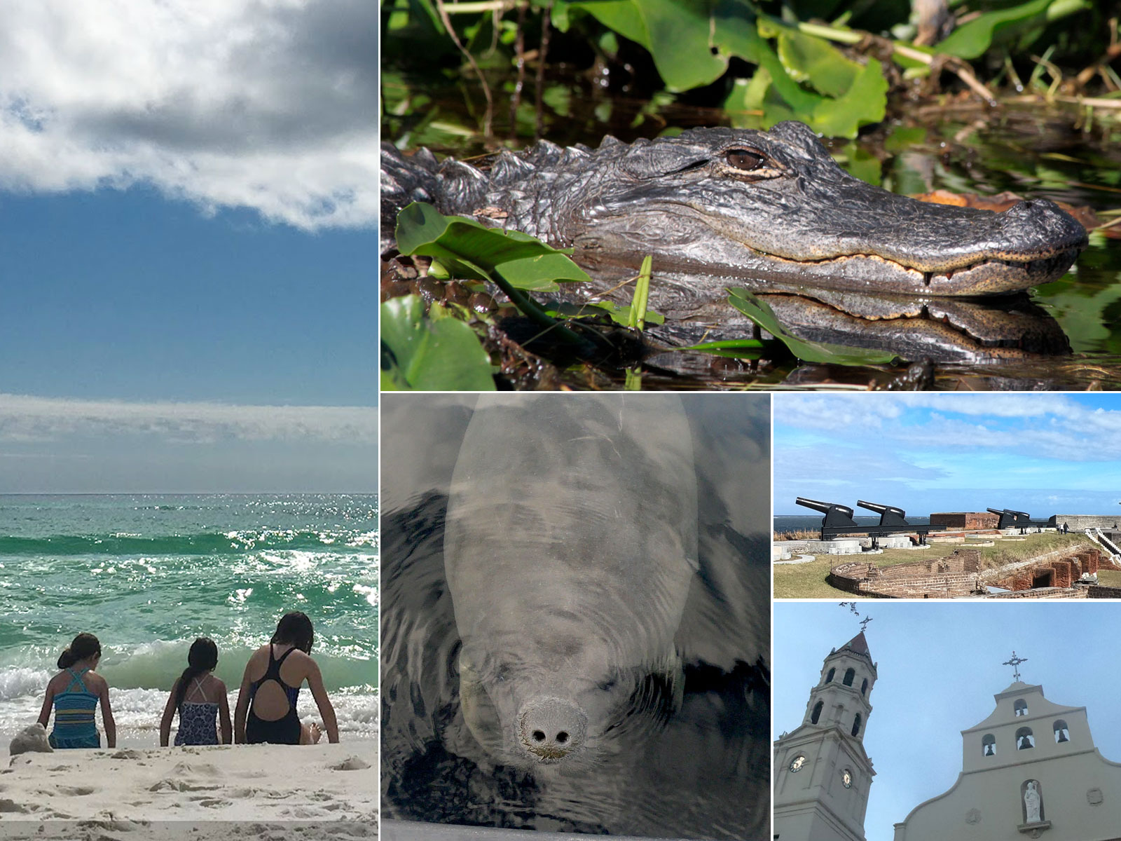 Montage of 7 best campgrounds in Florida: manatees, Grayton Beach, alligator, Fort Clinch, Saint Augustine