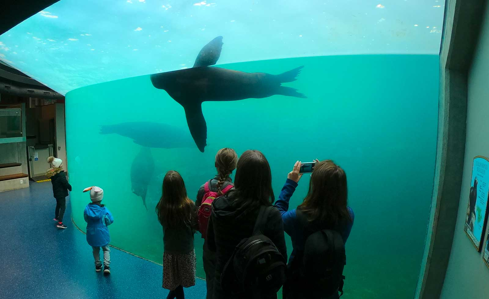 Kids watching a tank with seal and sea lions at Riverbanks Zoo & Garden, Columbia, SC