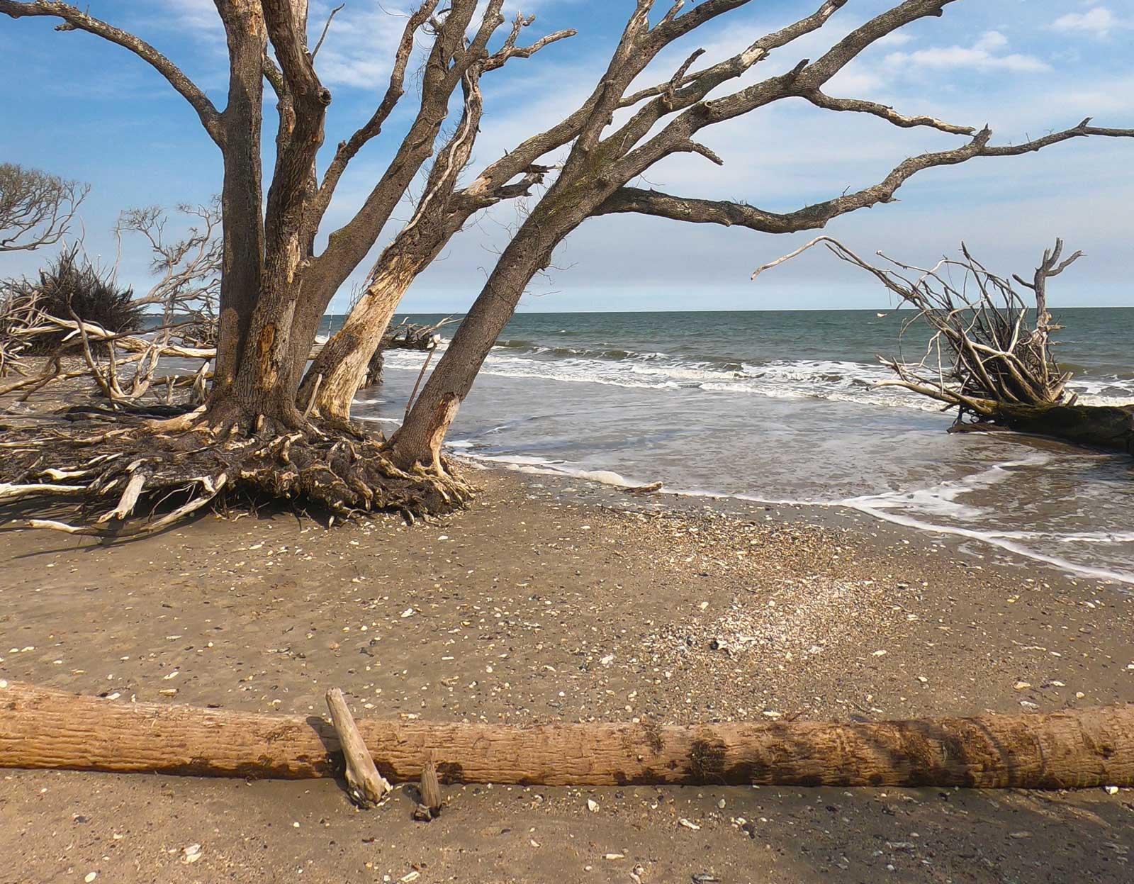 Beach boneyard at Botany Bay Plantation, Edisto Island, SC
