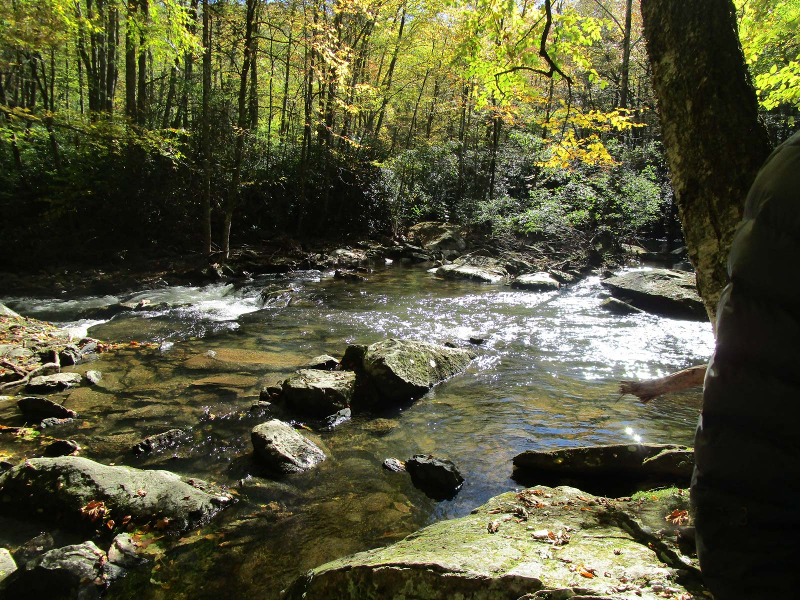 Rhododendrons and creek on the Boone Fork Trail near Julian Price Campground, off Blue Ridge Parkway, North Carolina