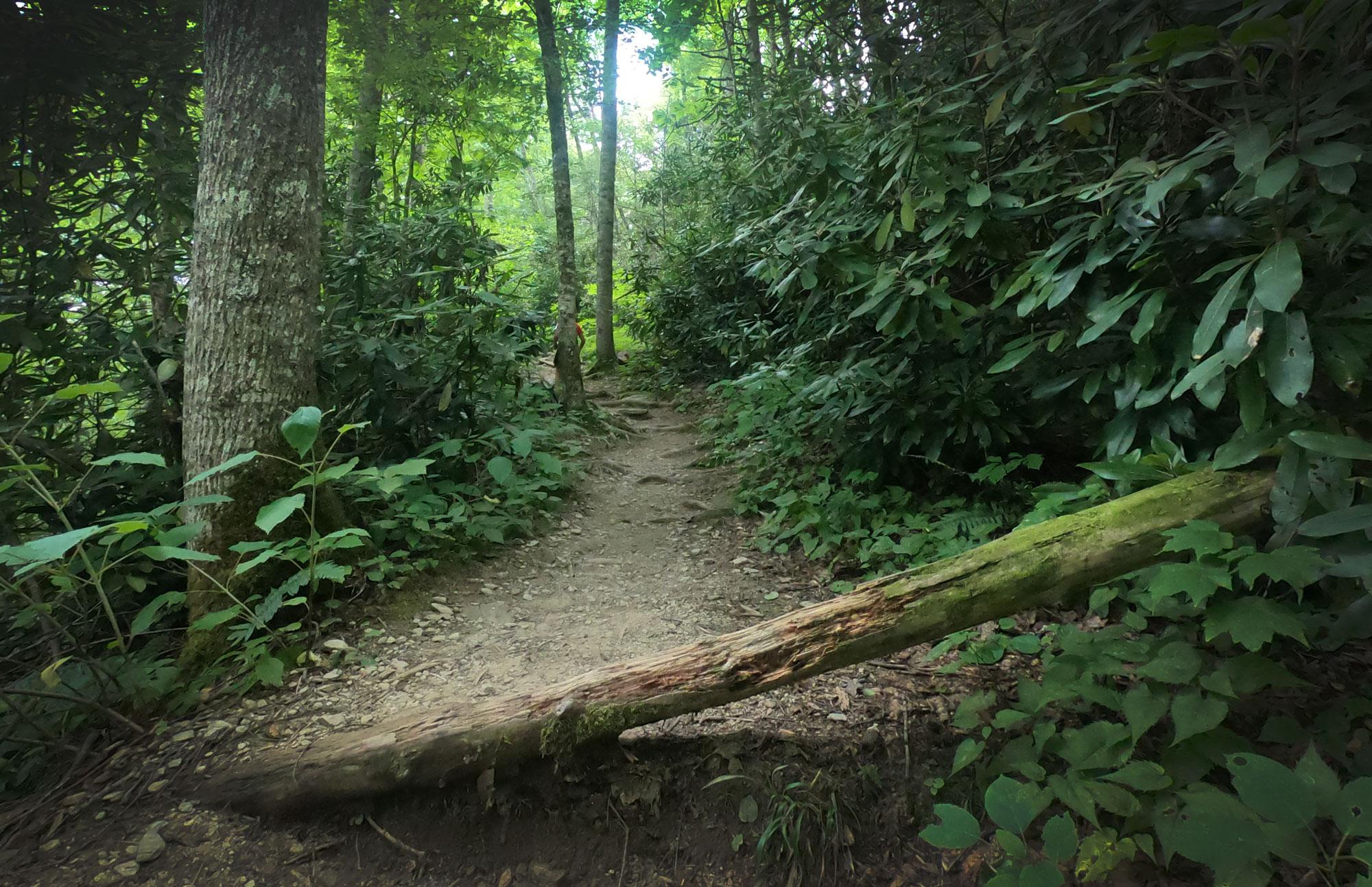 Hiking on the steep trail to Crab Orchard Falls, near Blue Ridge Parkway, North Carolina