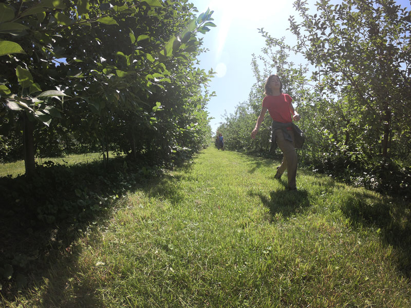 Young girl running through Burtts apple orchard, Vermont
