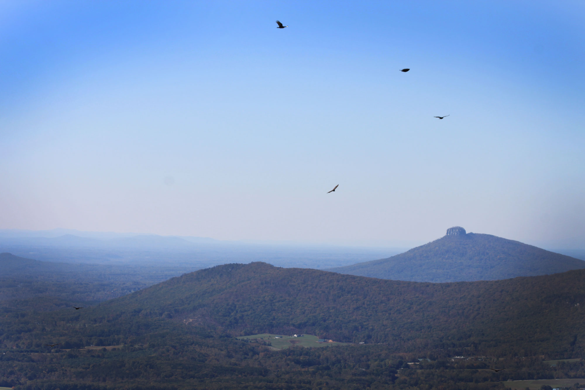 Black vultures in the sky and Pilot Mountain in the background while camping in Hanging Rock State Park, North Carolina