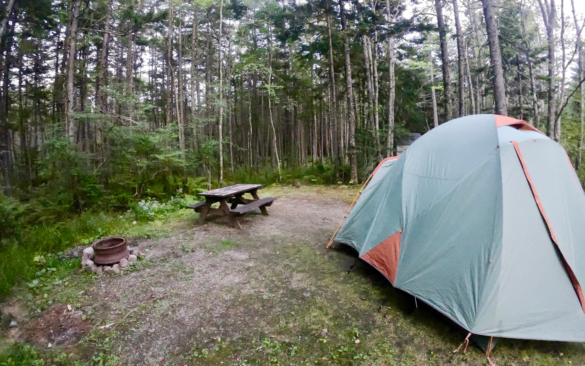 green tent, picnic table, and fire ring on spacious, wooded campsite at Sherwood Forest Campite & Cabins in Maine