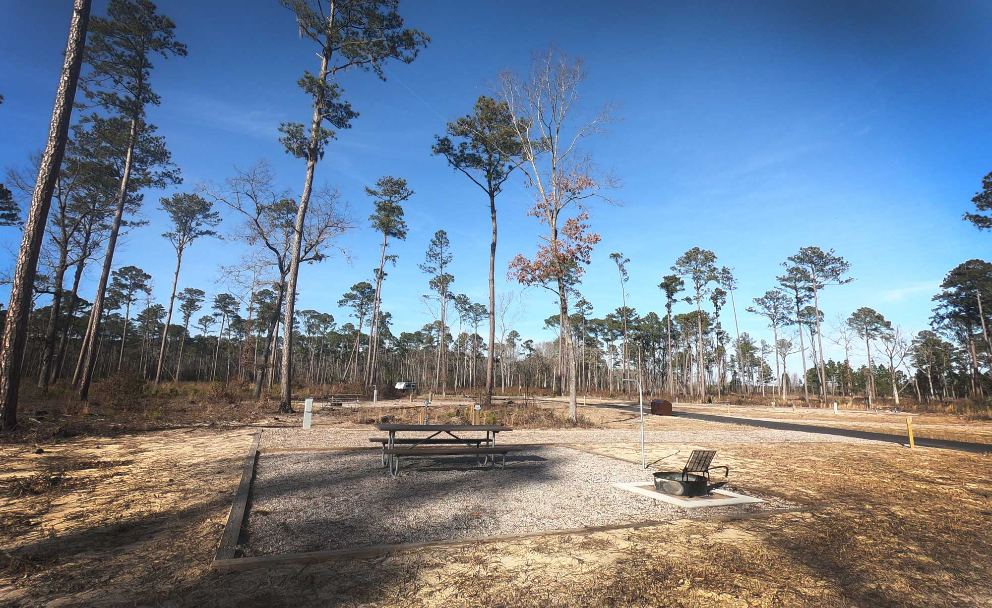 Goose Creek State Park RV campsite loop with picnic table and grill in North Carolina