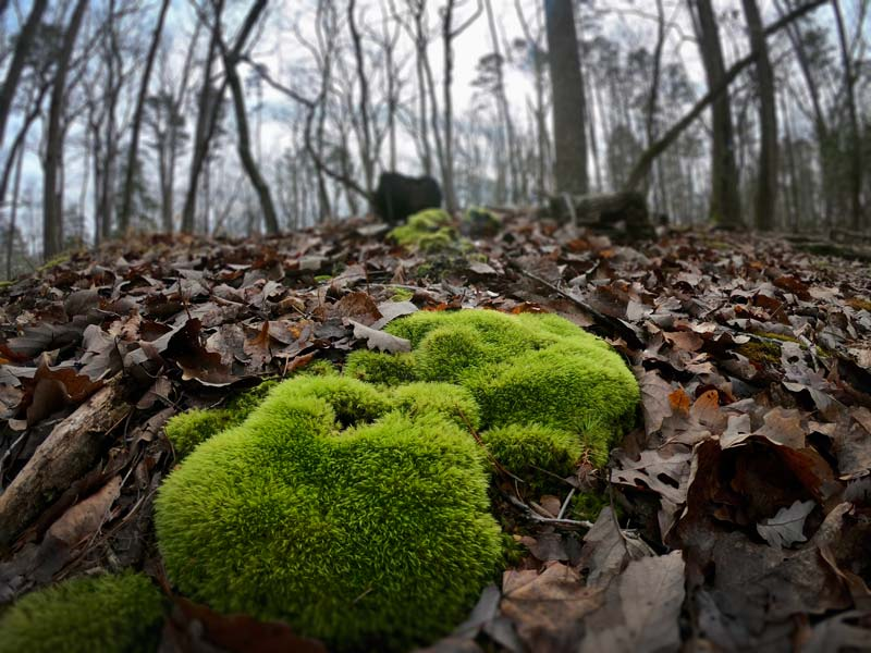 Moss-lined trails in Morrow Mountain State Park, North Carolina